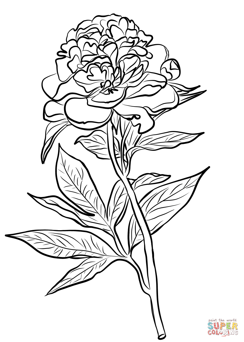 Chinese Peony Coloring Page Free Printable Coloring Pages