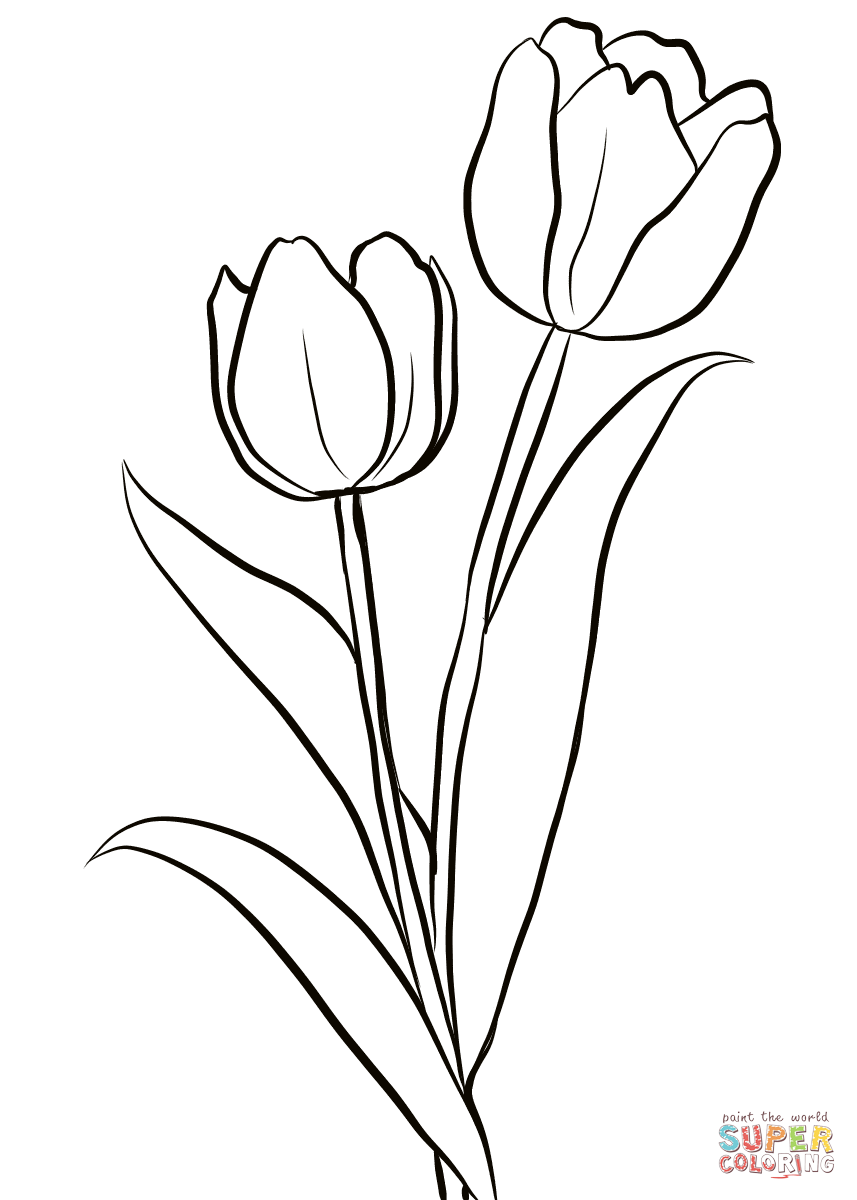 Two Tulips coloring page | Free Printable Coloring Pages | colouring pages tulip flowers