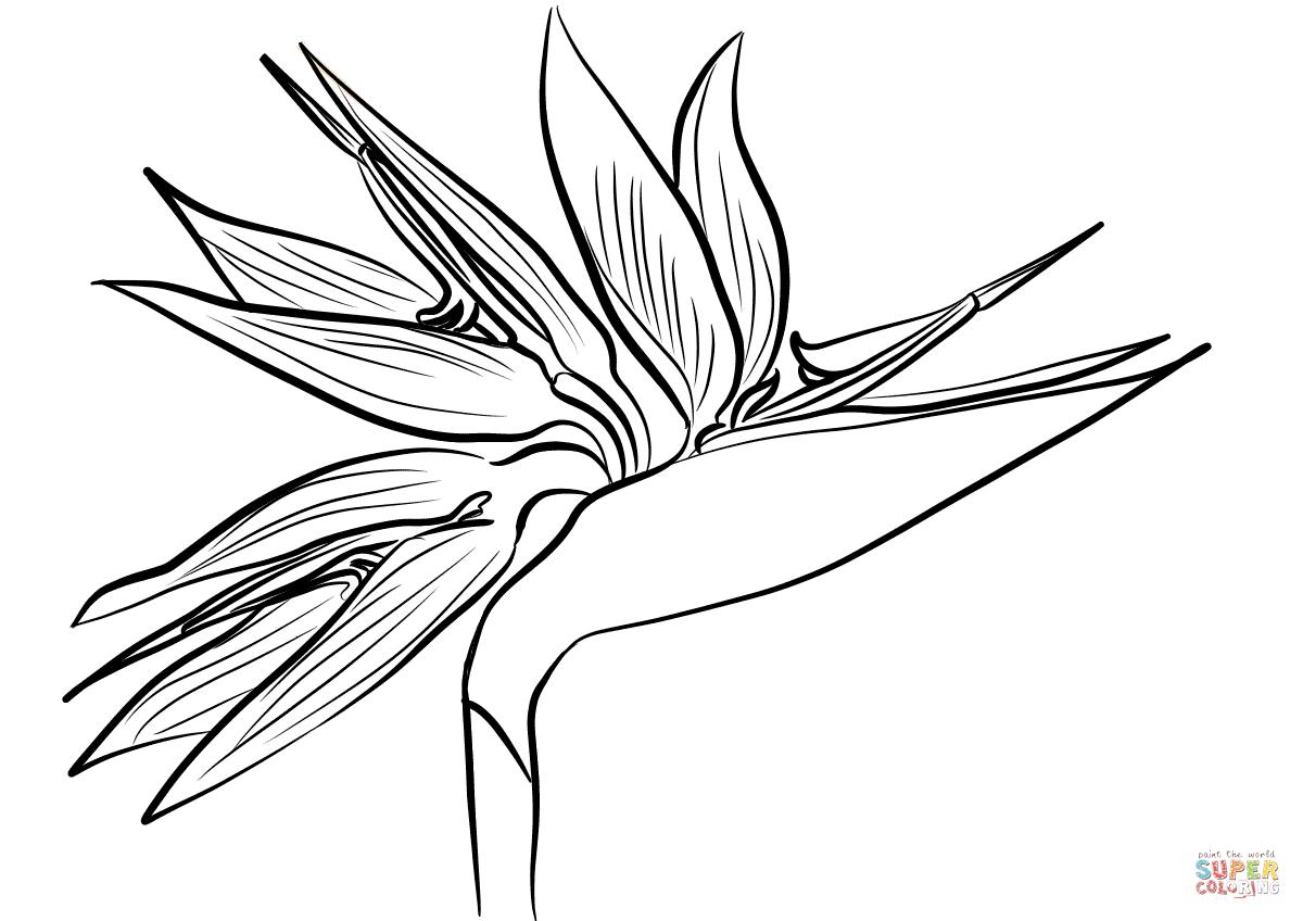 Bird On Flower