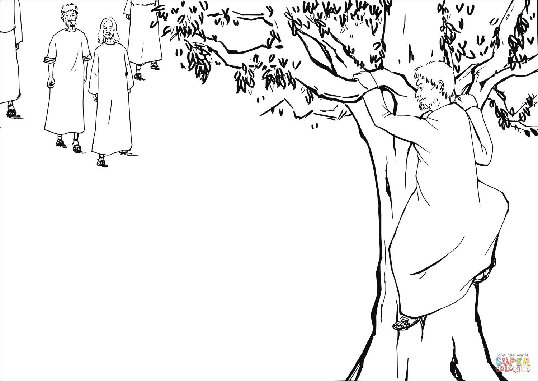 Zacchaeus A Chief Tax Collector Climbed A Sycamore Fig