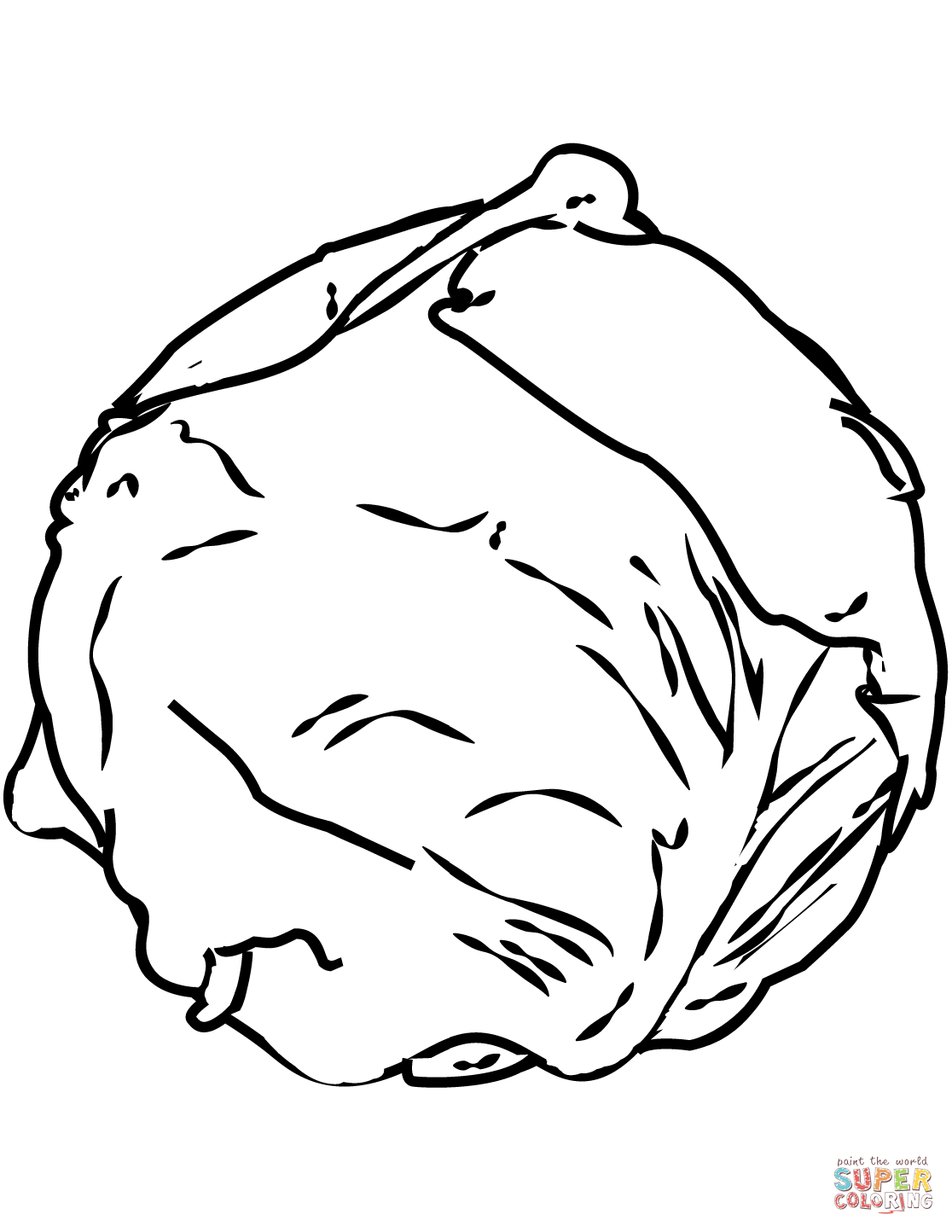 Cabbage Coloring Page Free Printable Coloring Pages