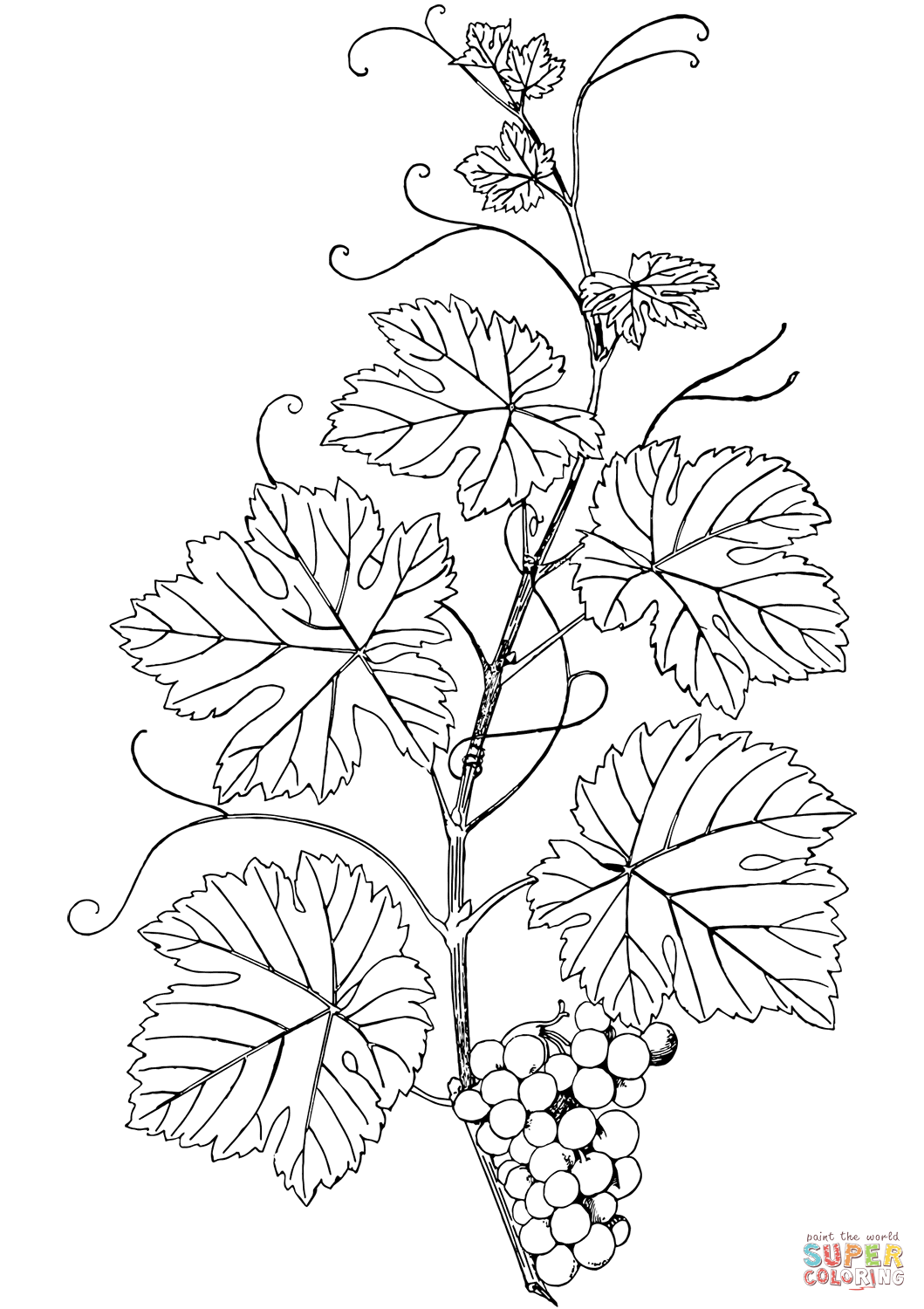 Branch Of G S Coloring Page