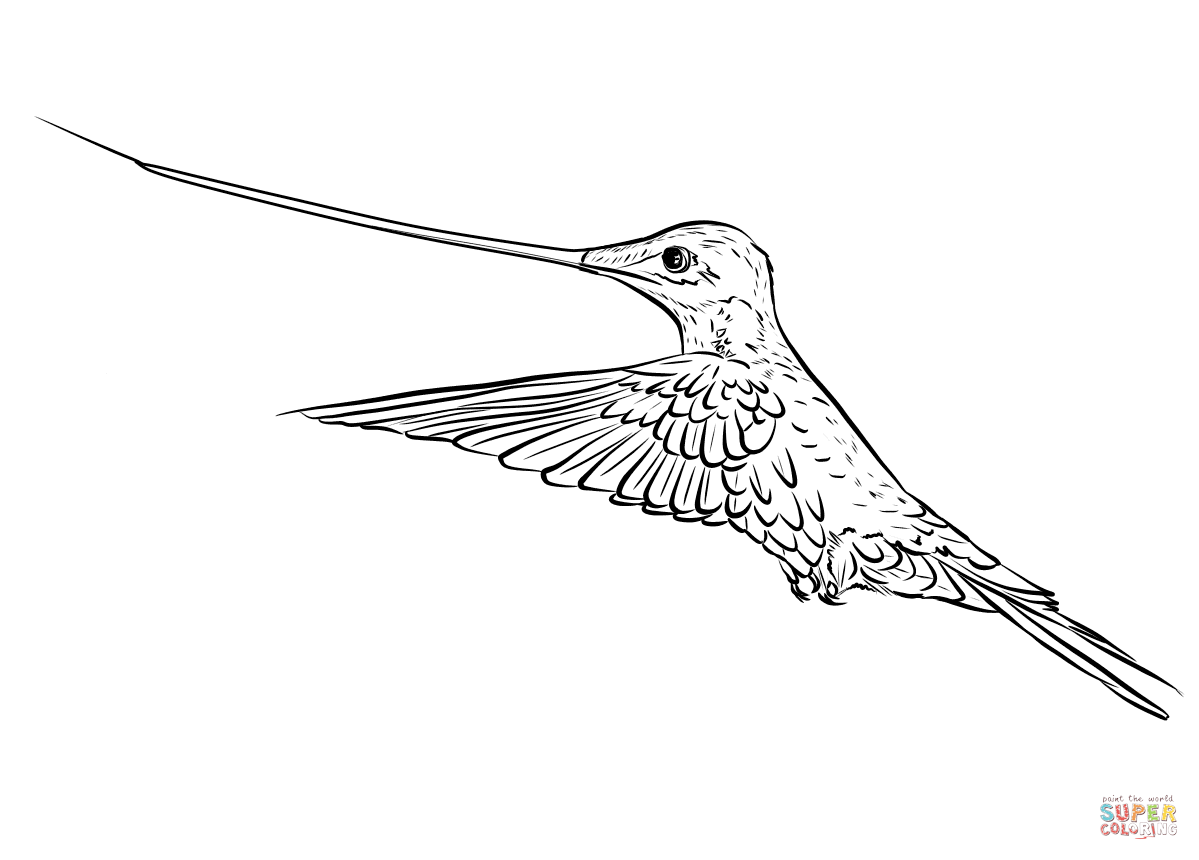 Sword Billed Hummingbird Coloring Page