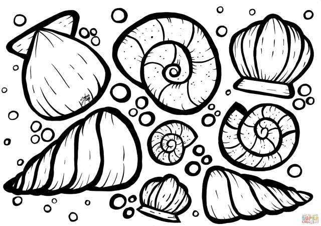 Shells coloring page  Free Printable Coloring Pages