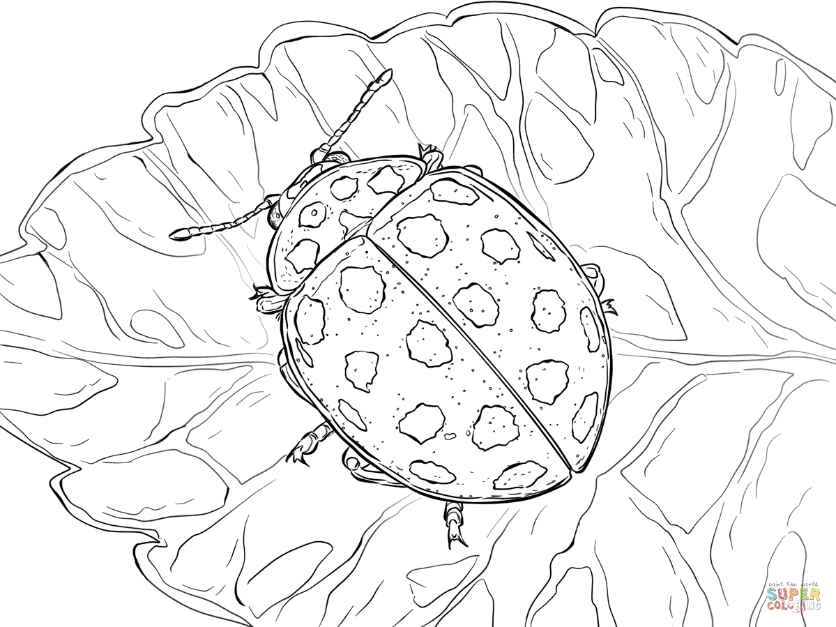 22 Spot Ladybird Coloring Page