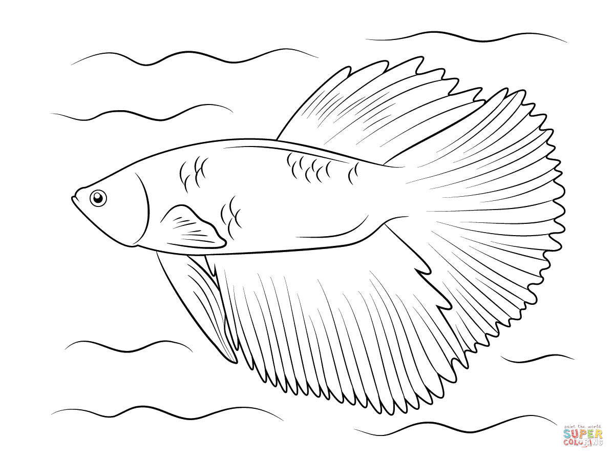 Halfmoon Betta Coloring Page