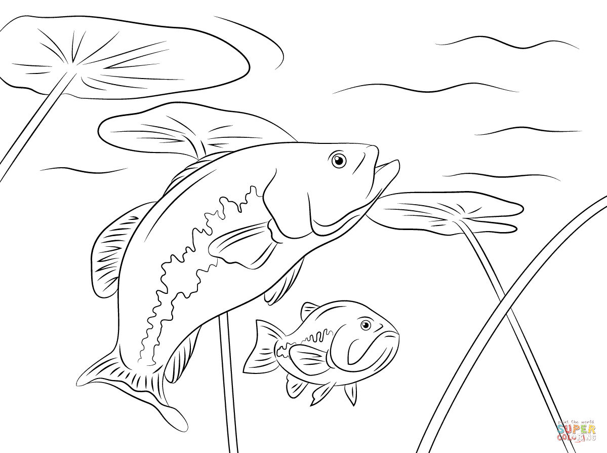 Largemouth Basses Coloring Page