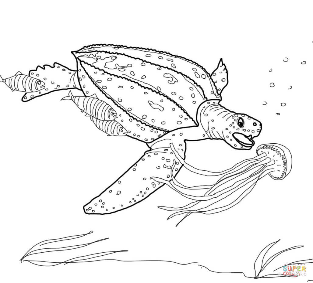 Desenho De Tartaruga De Couro Cacando Agua Viva Para