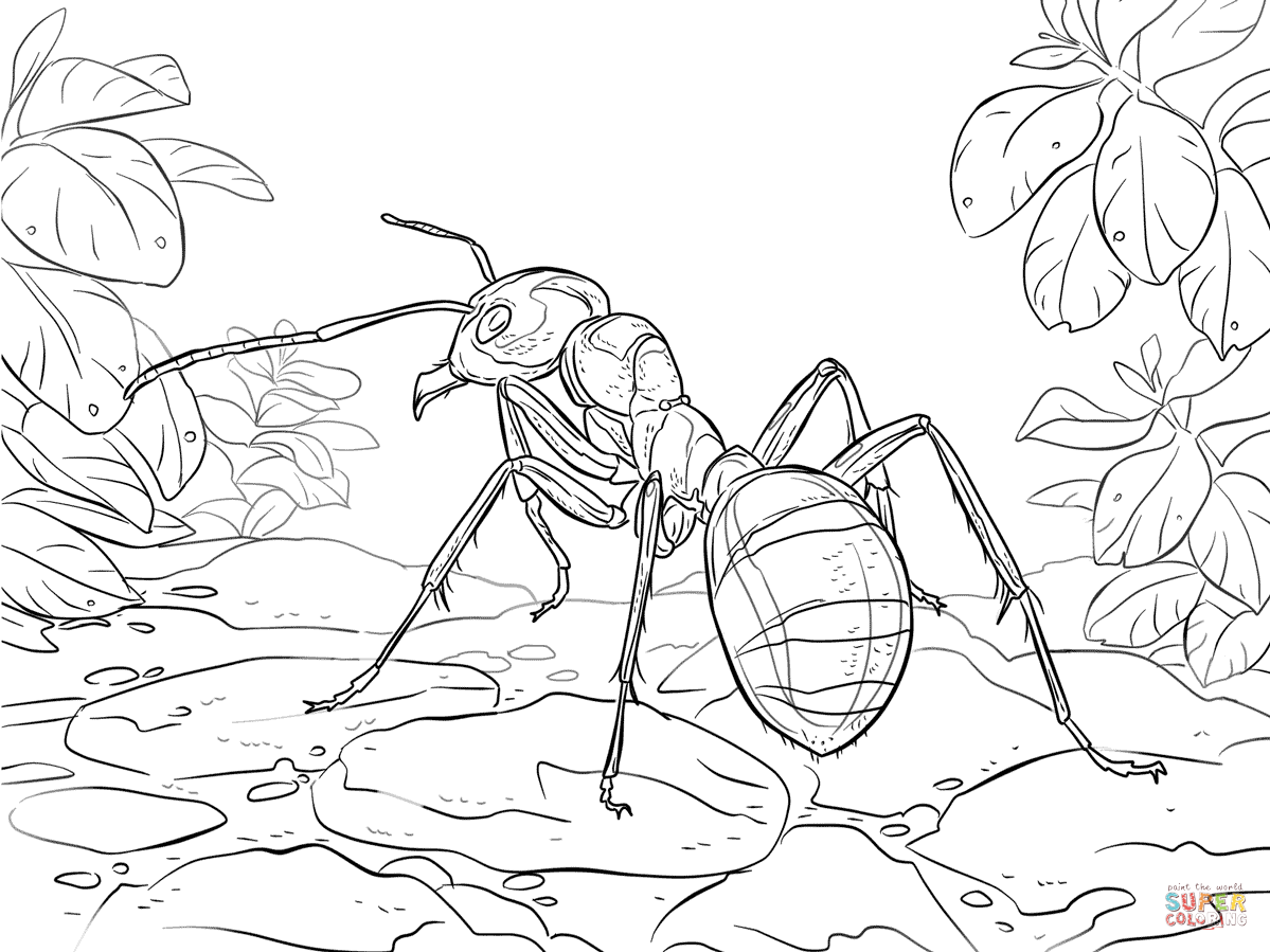 Red Wood Ant Coloring Page