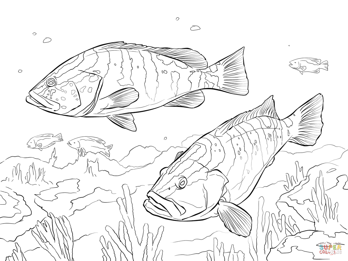 Two Nassau Groupers Coloring Page Free Printable Coloring Pages