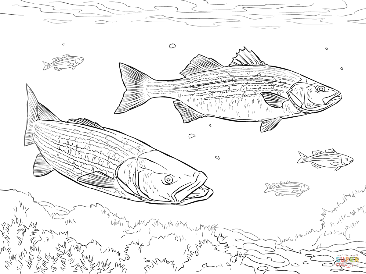 two striped basses coloring page free printable coloring pages