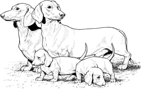 dachshund with puppies coloring page free printable coloring pages