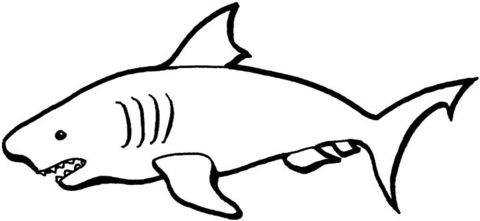 Click To See Printable Version Of Australian Shark Coloring Page