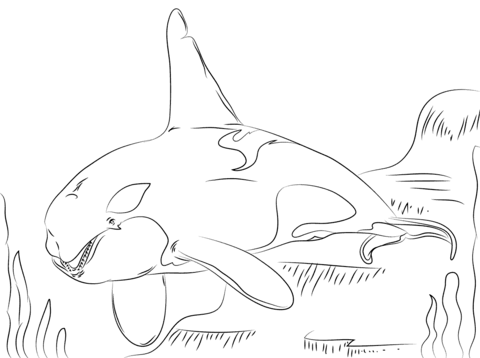 killer whale coloring pages free coloring pages