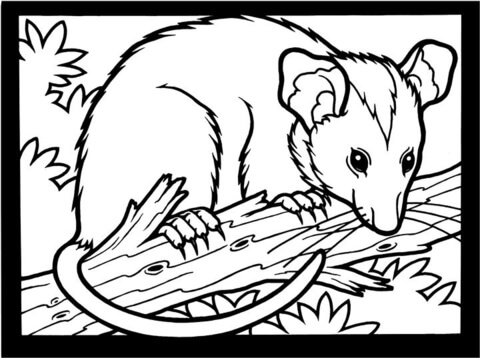 Click To See Printable Version Of Opossum Coloring Page