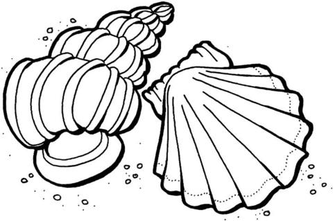 coloriage coquillages coloriages à imprimer gratuits