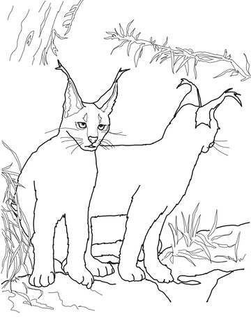 click to see printable version of caracal
