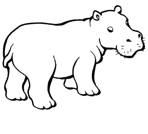 baby hippo coloring page free printable coloring pages