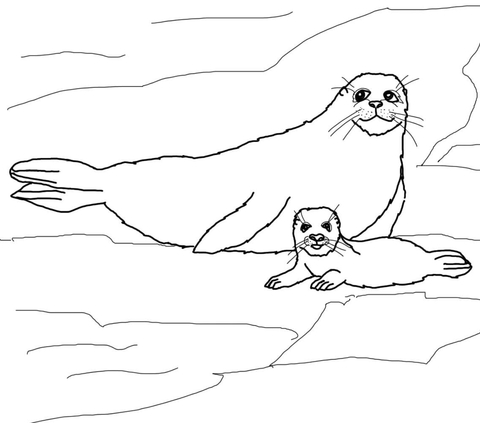 to see printable version of harp seal mother and baby coloring page