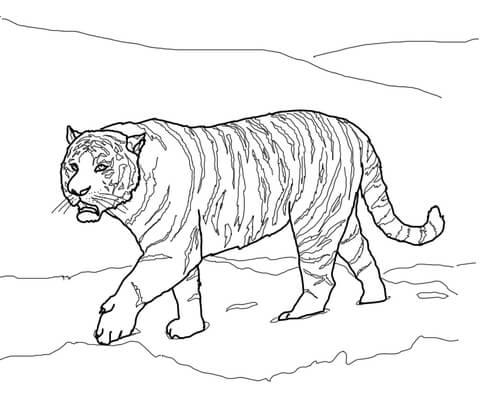 coloriage tigre de sibérie tigre de l 39 amour coloriages à