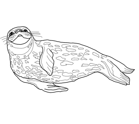 advanced coloring pages seal coloring pages