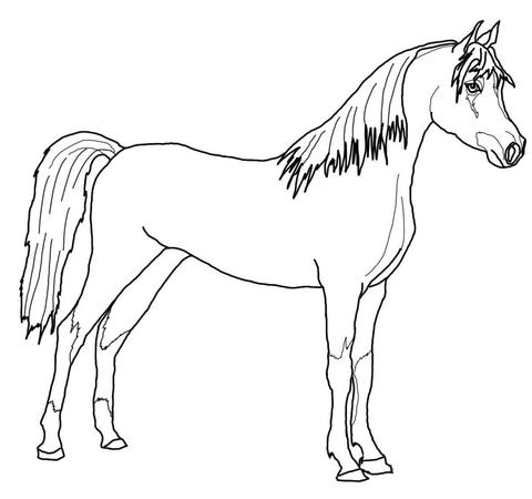 disegno di cavallo arabo da colorare disegni da colorare e stampare