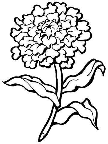carnation flower coloring page free printable coloring pages