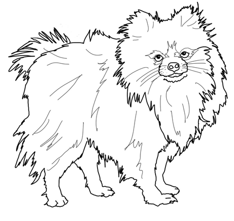 Click To See Printable Version Of Pomeranian Dog Coloring Page