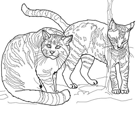 european wildcats free printable