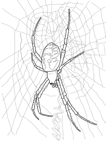 Black And Yellow Garden Spider Coloring Page Free