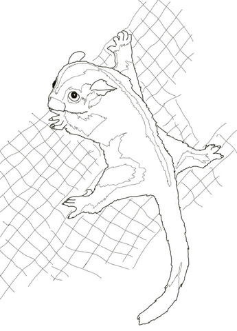 Sugar Glider Coloring Page Free Printable Coloring Pages
