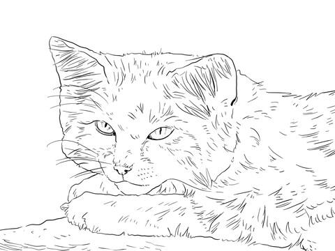 desenho de retrato de gato do deserto para colorir desenhos para
