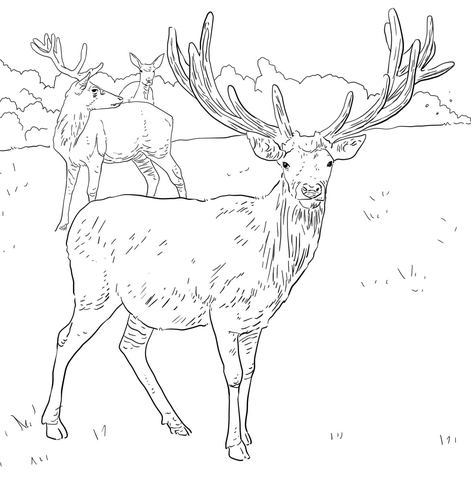 deers coloring pages free coloring pages