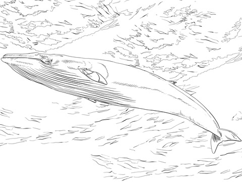 whales coloring pages free coloring pages