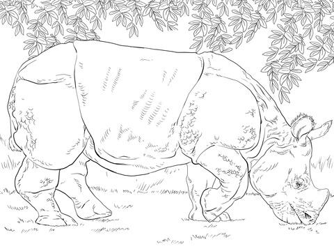 Disegno Di Il Rinoceronte Indiano Da Colorare Disegni Da