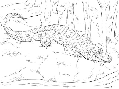 Ausmalbild China Alligator Ausmalbilder Kostenlos Zum