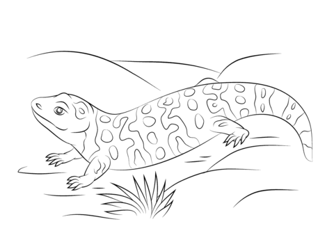 click to see printable version of cute gila monster coloring page