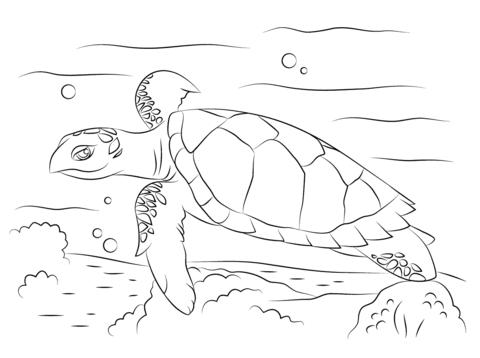 coloriage tortue imbriquée mignonne coloriages à imprimer