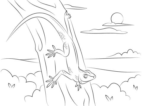 Ausmalbild Gecko Auf Einem Ast Ausmalbilder Kostenlos