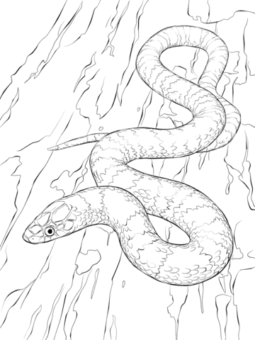 snakes coloring pages free coloring pages