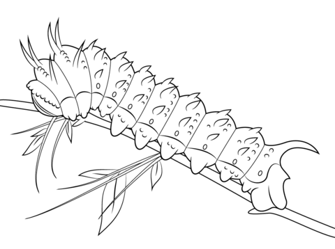 hubbards silkmoth caterpillar coloring page free printable