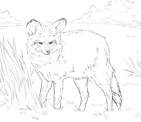 Bat Eared Fox Coloring Page Free Printable Coloring Pages