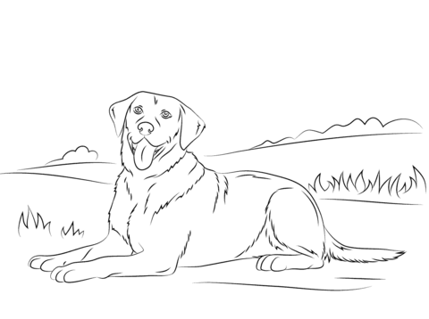 yellow lab easy coloring pages