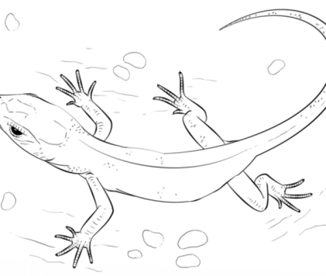 Lizard Coloring Page Free Printable Coloring Pages