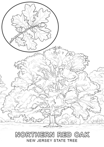 new jersey state tree coloring page free printable coloring pages