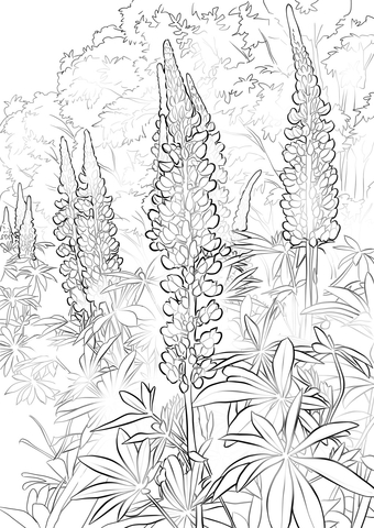 bluebonnet flower coloring page free printable coloring pages