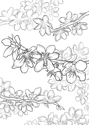 fruit trees coloring pages free coloring pages