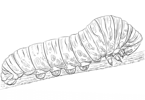 swallowtail caterpillar coloring page free printable coloring pages