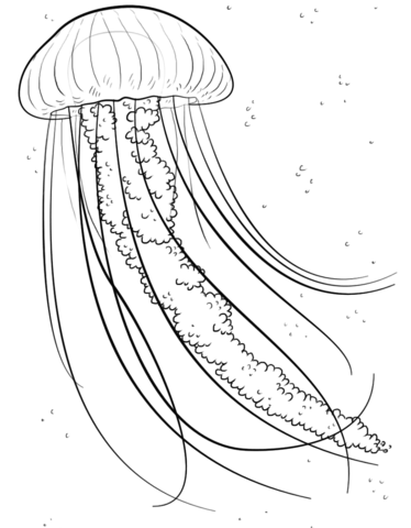 jellyfish coloring pages to print coloring pages