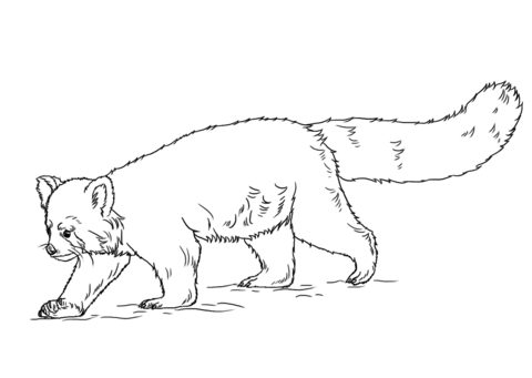 red panda coloring pages free coloring pages